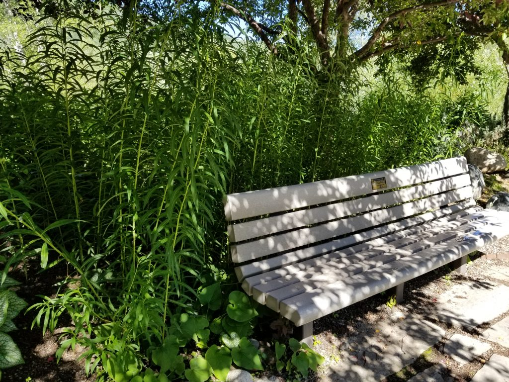 Greenery surrounds a bench at the Yampa River Botanic Park.