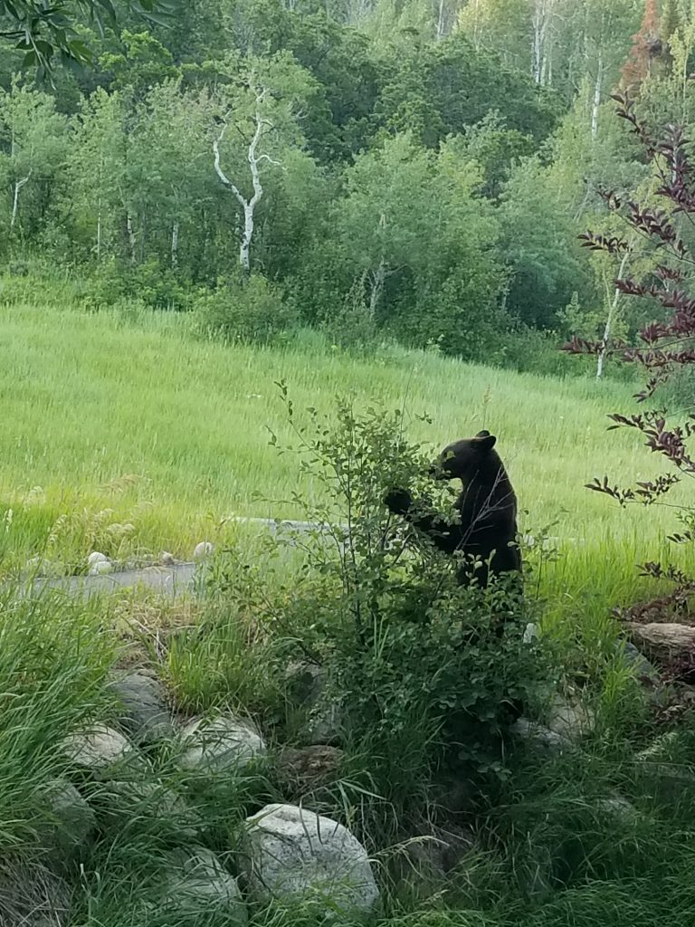Backyard snacking in Routt County.