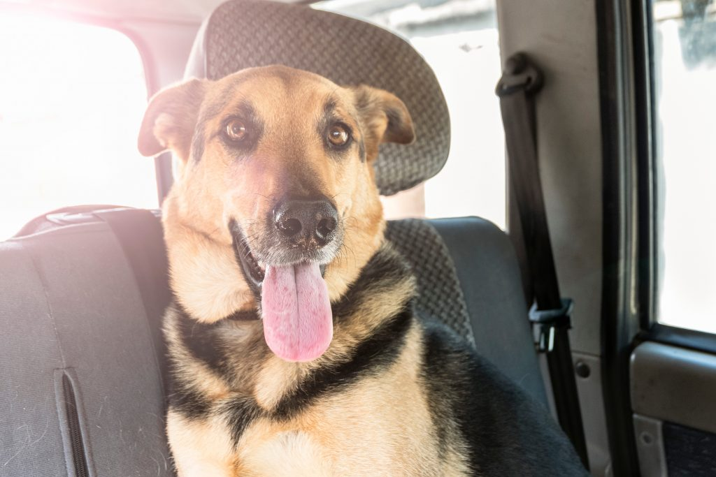 Protect The Pups Steamboat Police Rescue More Animals From