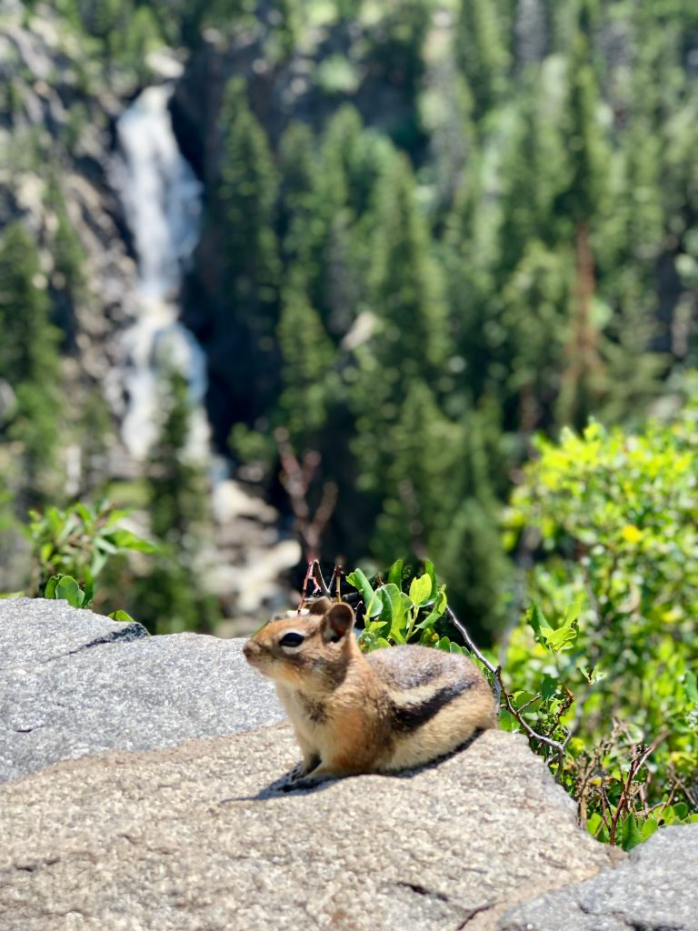 A chipmunk poses for a photo in front of Fish Creek Falls.