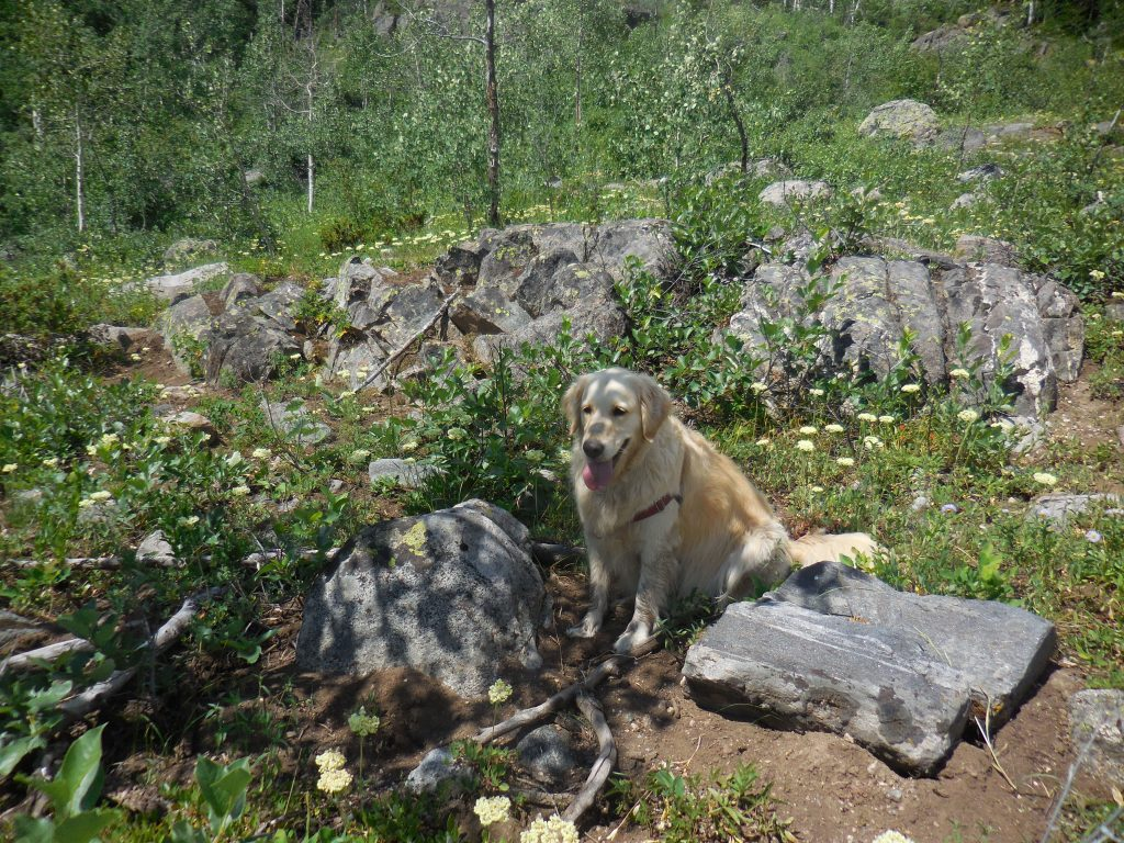Resting in Shade at Mount Zirkel Wilderness Area