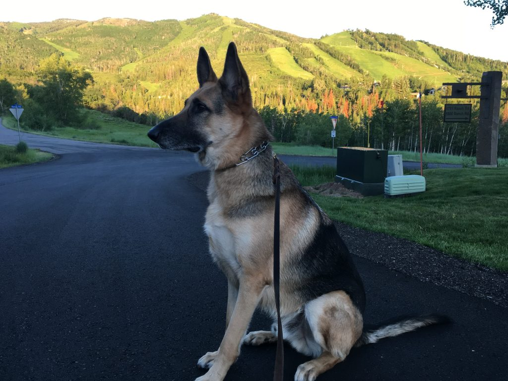 Sharing a pic of my dog Trask in front of Steamboat Resort right that before the alpenglow