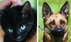 Routt County adoptable pets: Charcoal the kitten and Kida the dog