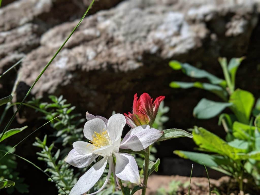 Wildflowers blossom in Mandel Pass in the Flat Tops Wilderness Area.
