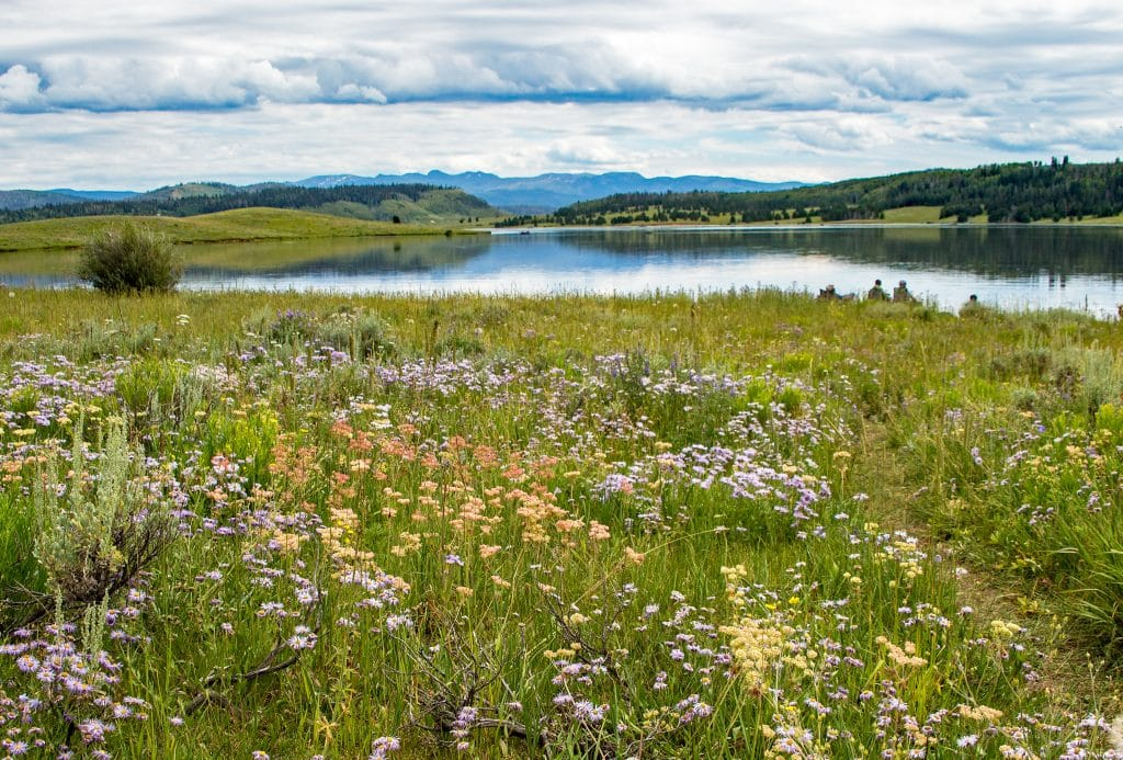 An abundance of wildflowers in bloom at Steamboat Lake State Park.