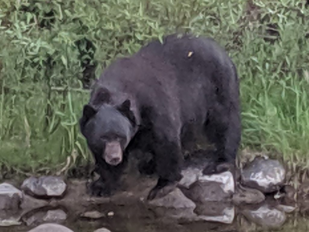 This big fella was our dessert companion across the river from E3.
