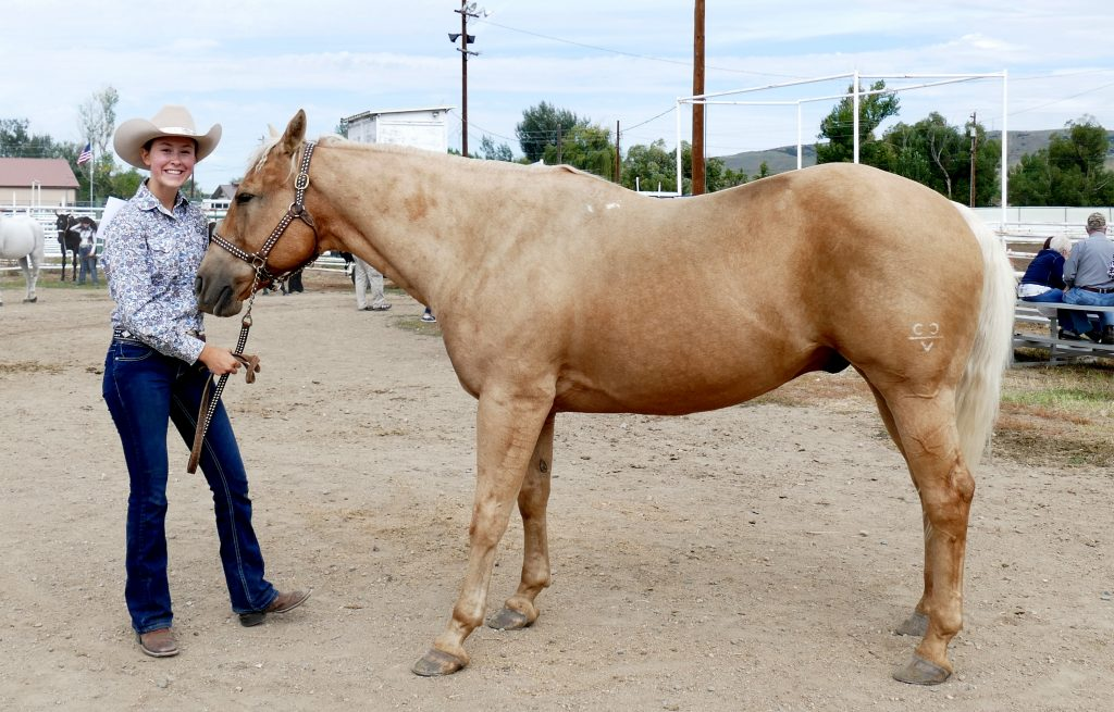 Participants show horses at the Open Horse Show at the Routt County Fair this weekend.