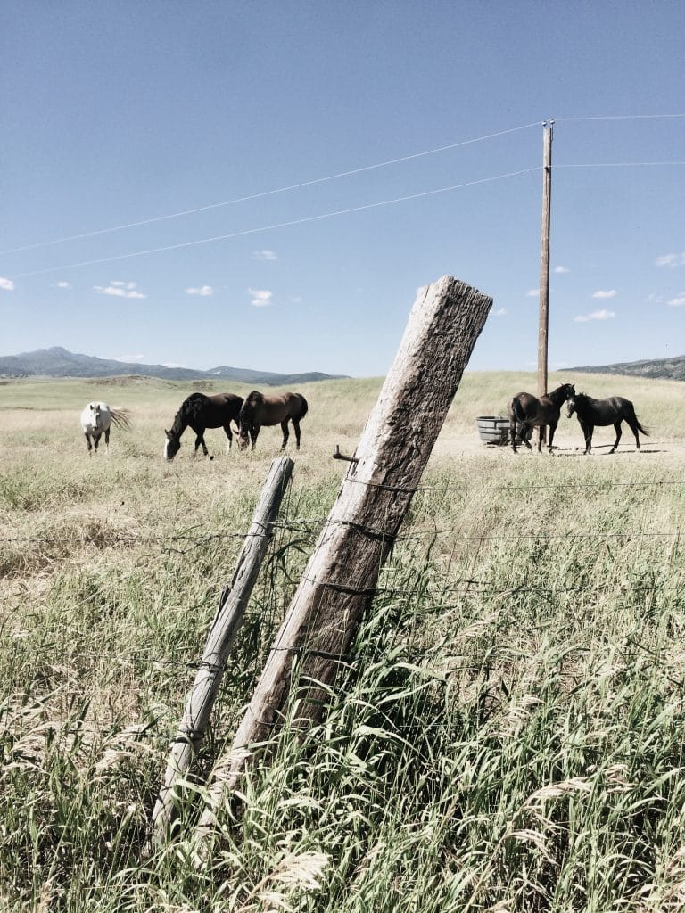 Horses on Route County 52E.