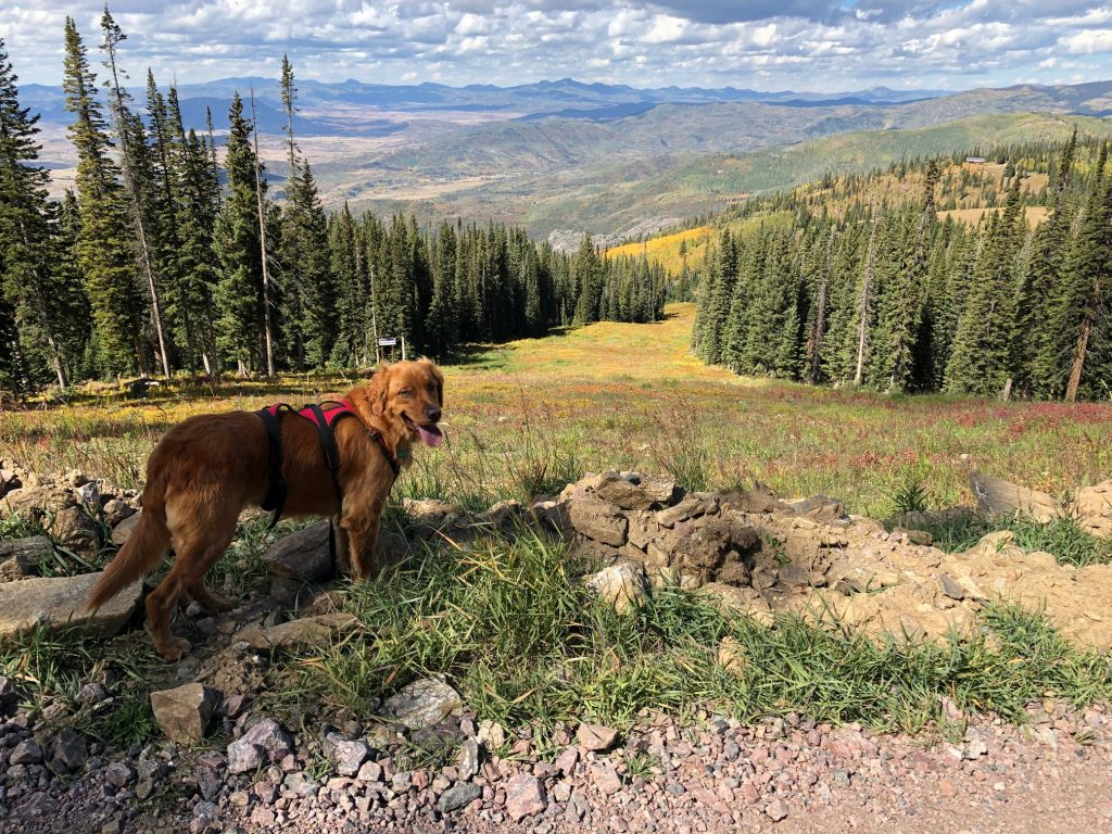 Hike on Mount Werner with Timber