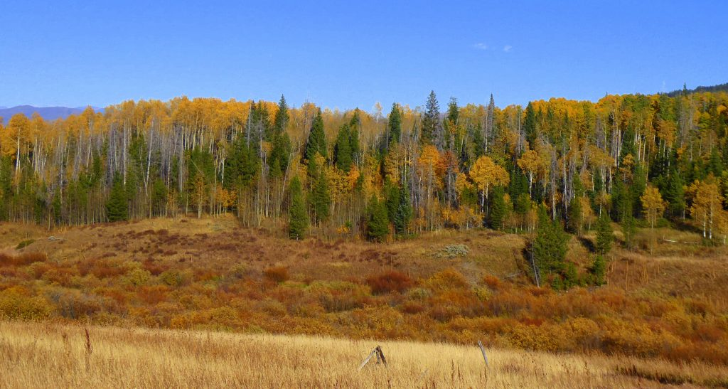 Fall colors decorate Gore Pass along Rabbit Ears Pass.