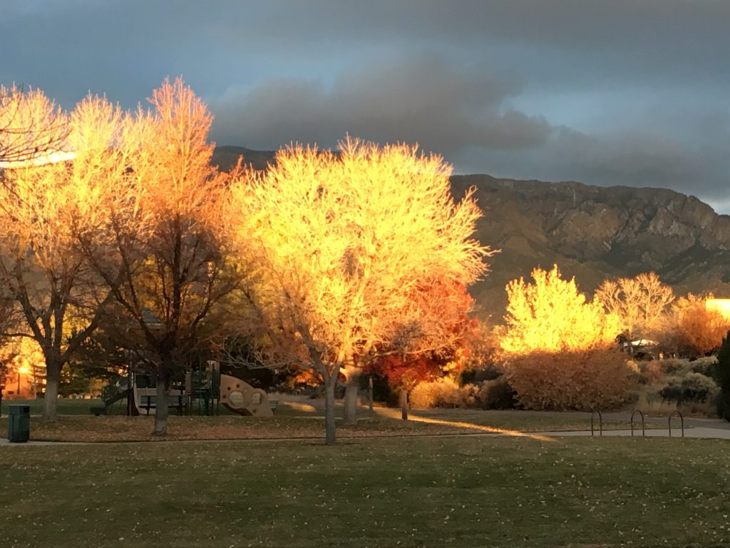 Trees turning their colors look as if they are on fire in the setting sun.