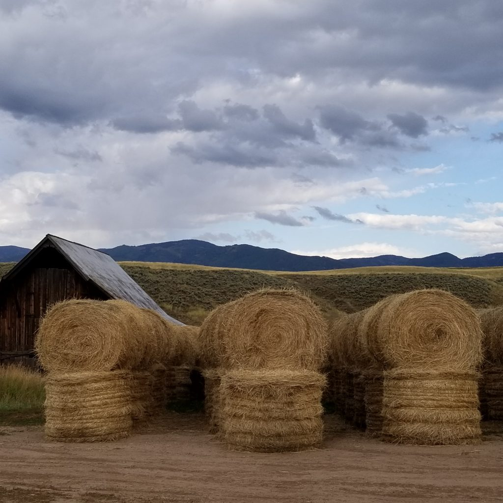 Hay bales are starting to stack up around Routt County.
