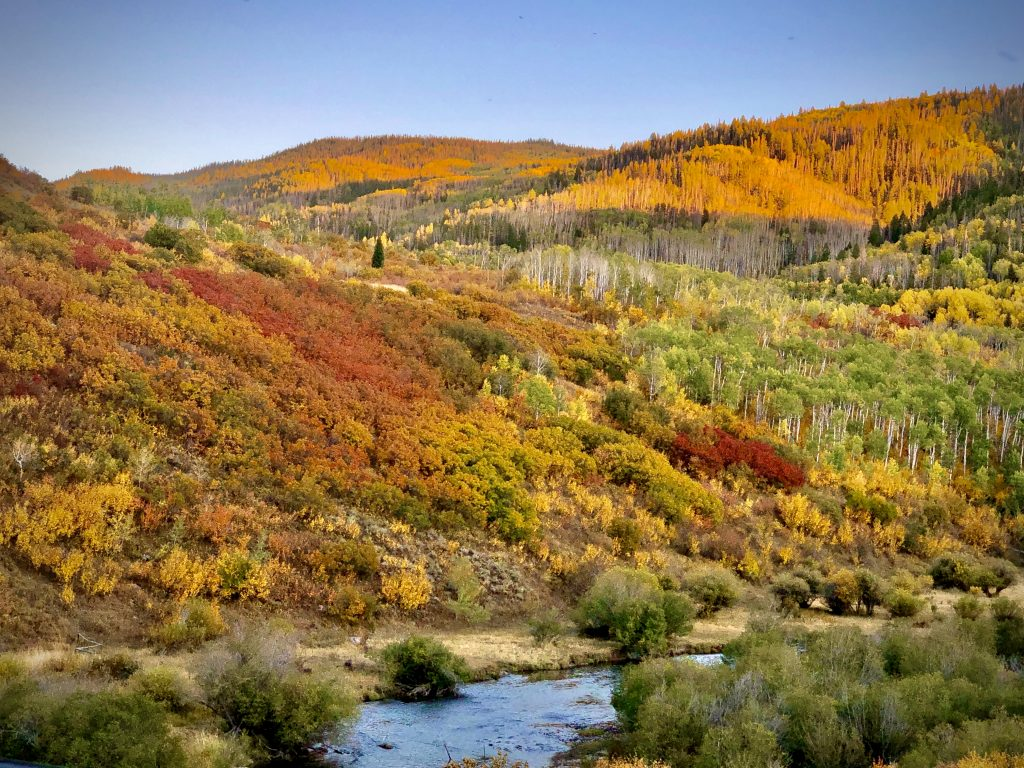 Golds and reds appear as fall reaches the Sarvis Creek Wilderness Area.