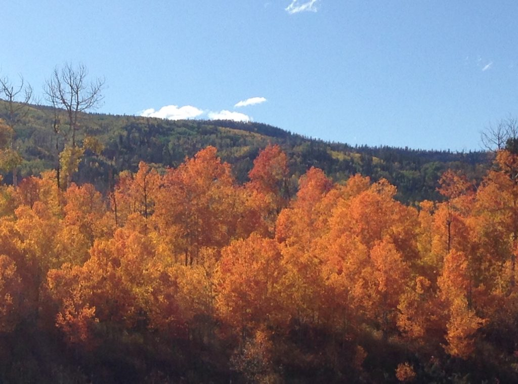 South Routt's fall colors are popping.