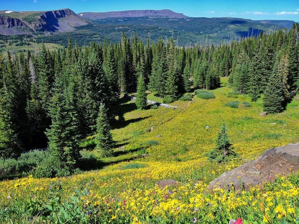 Flat Top Wildflowers, North Derby Trail, Flat Tops Wilderness Area