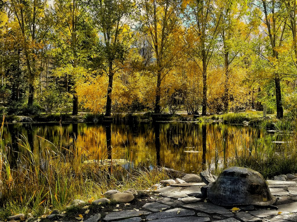 Fall Colors Reflected in the Pond at the Yampa River Botanical Gardens.
