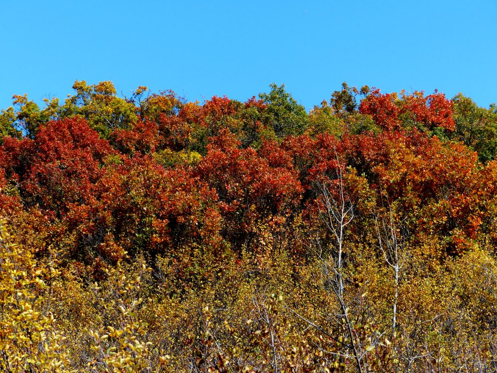 The yellow, reds, and green as the leaves are starting to change colors, under a very blue sky this morning.