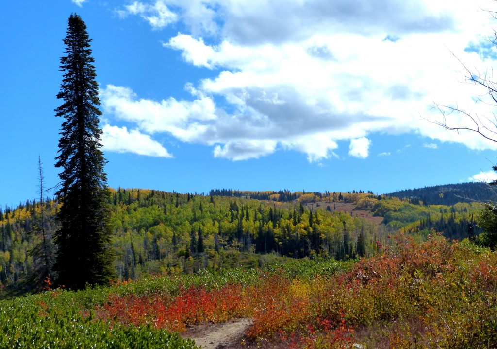 Panorama Trail in Steamboat.