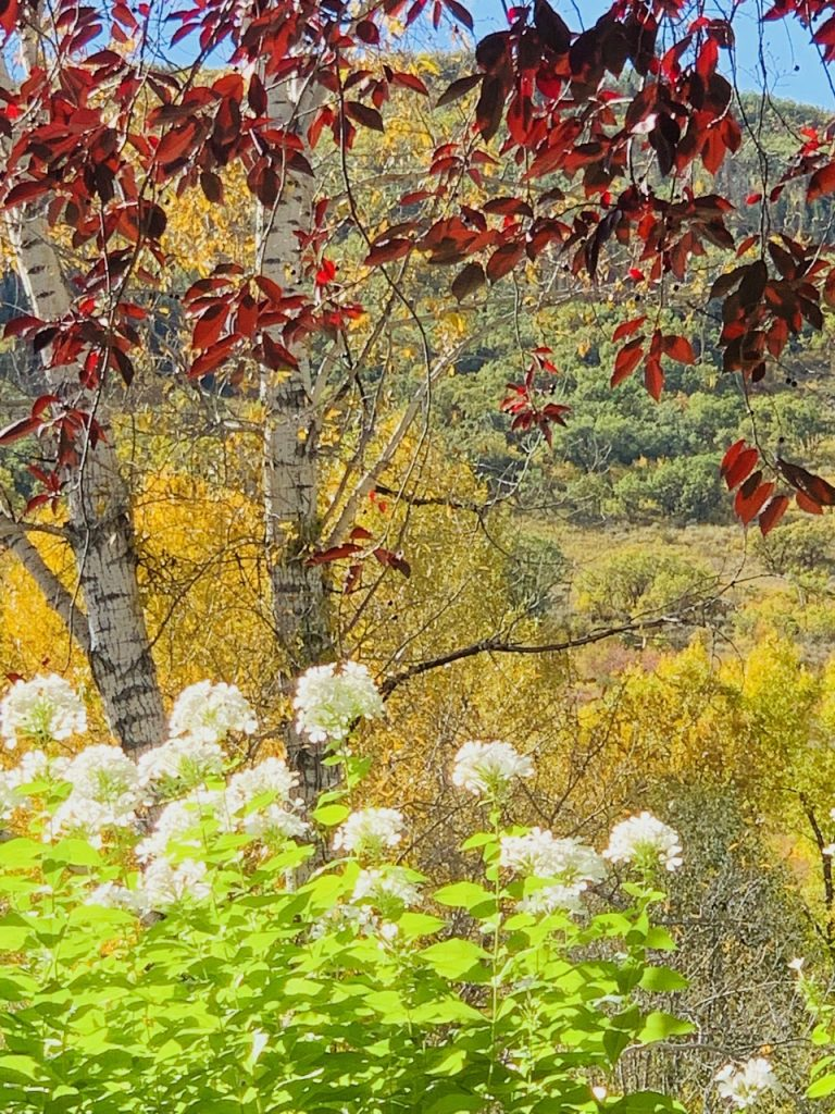 Spring meets Fall at Steamboat's Yampa River Botanic Park