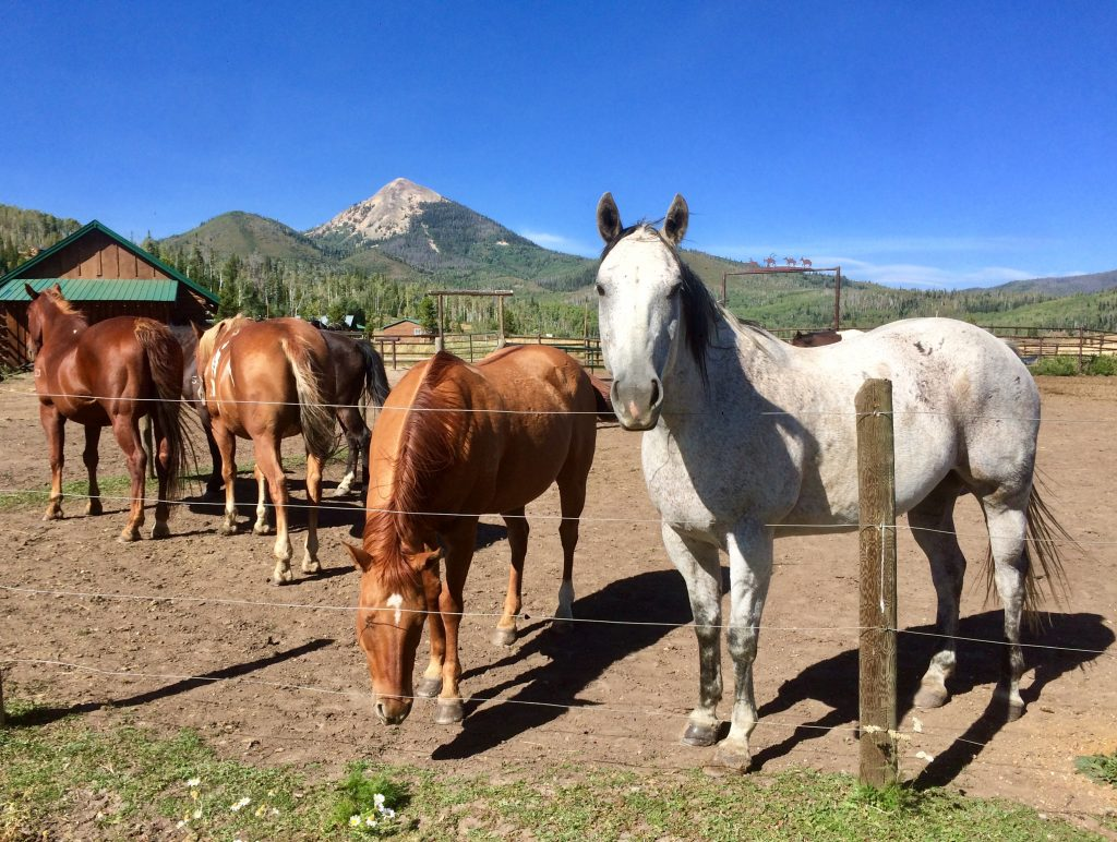 Hahn' Peak Roadhouse horses, with Hahn's Peak in background.