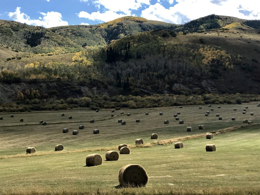 Bales of hay dot a field near Oak Creek along Routt County Road 29.