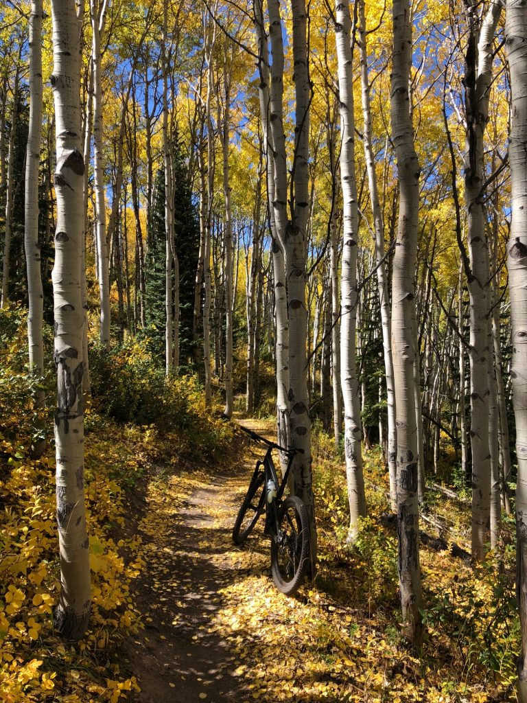 Wild Rose Trail on Emerald Mountain is painted in gold as the aspens turn.