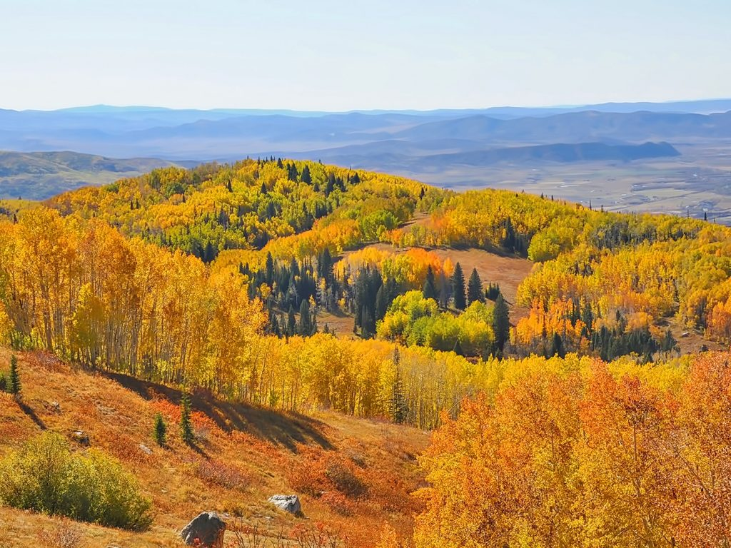 Fall colors explode across Buffalo Pass.
