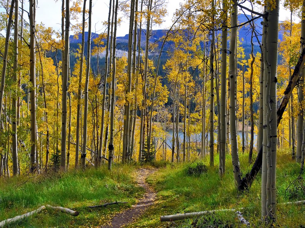 A path lined with aspens leads the way to Mandall Basin in the Flat Tops Wilderness Area.