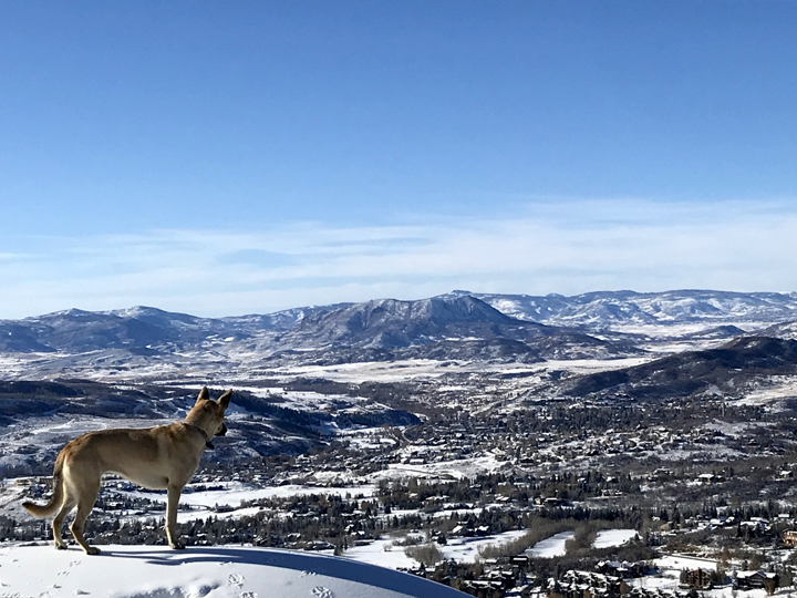 That's quite a view of snowy Steamboat. This is Nova looking out over Steamboat.
