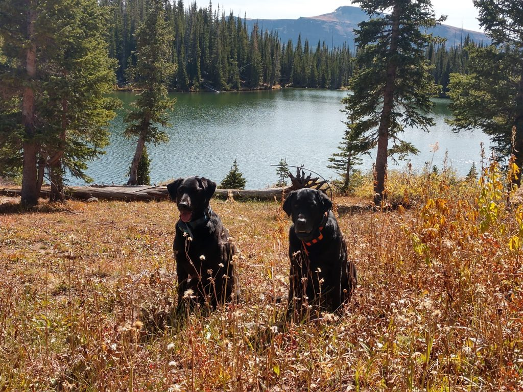 Tikka and Zoe the dogs enjoy a nice fall day at Black Mandell Lake.