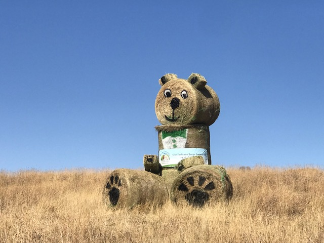 Hay bales are stacked and decorated to resemble a bear along Routt County Road 129.
