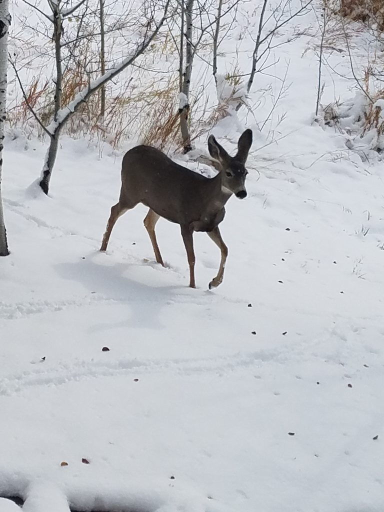 A deer treads lightly through snow.