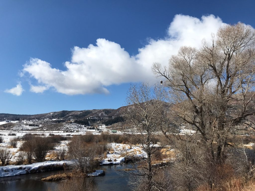 An eagle overlooks the Yampa River along the Yampa River Core Trail.