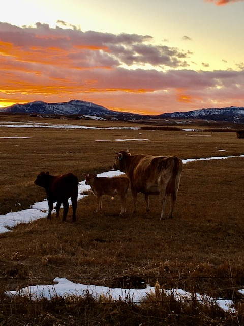 Everyone enjoys a beautiful November sunset in Routt County.