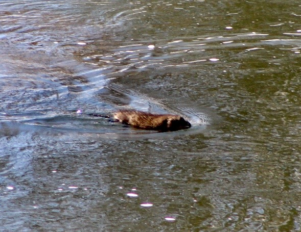 Critters along the Yampa River