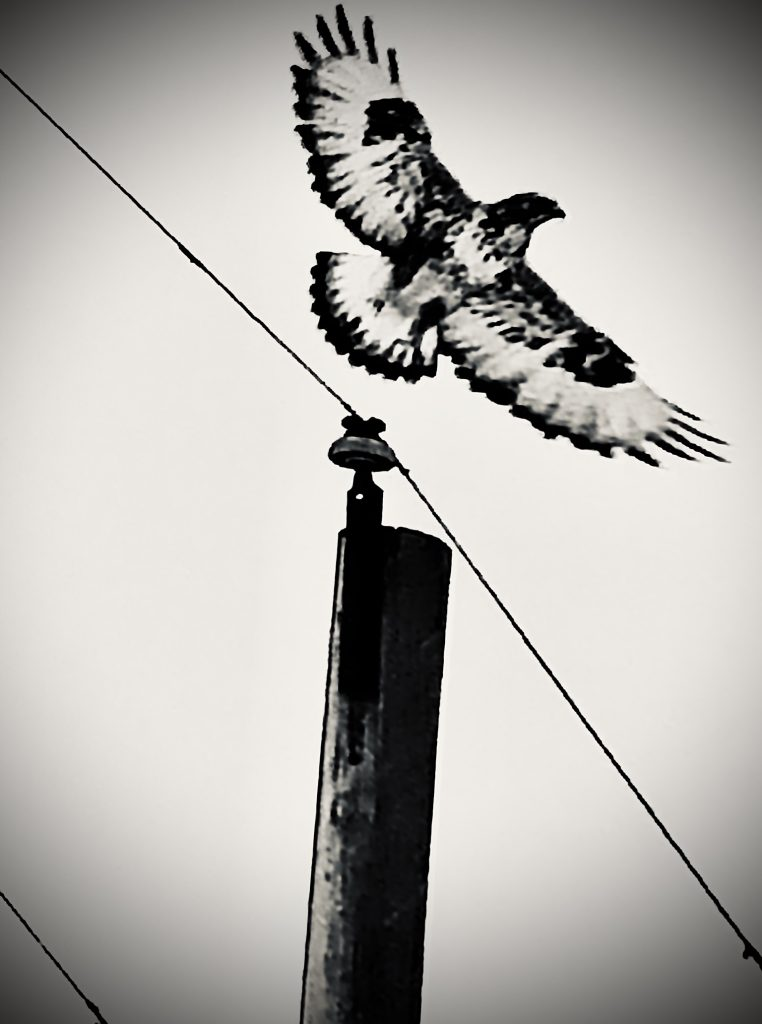 Taking flight from Routt County Road 33.