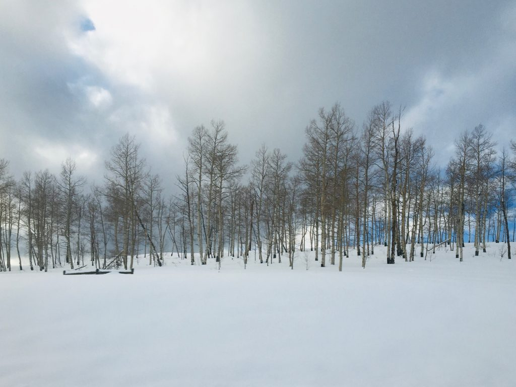 Bare aspen trees in the snow in Steamboat Springs.