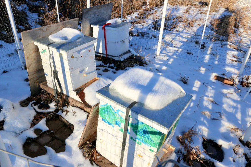 What happens to honeybees during the winter?