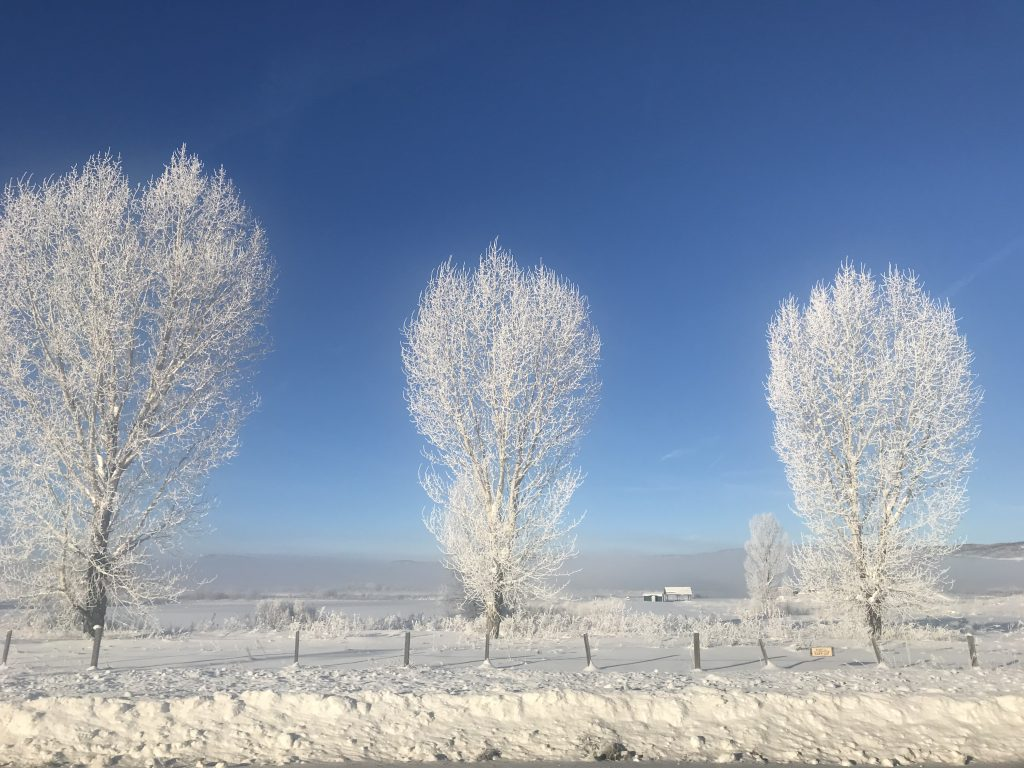 Frost coats trees in Yampa.