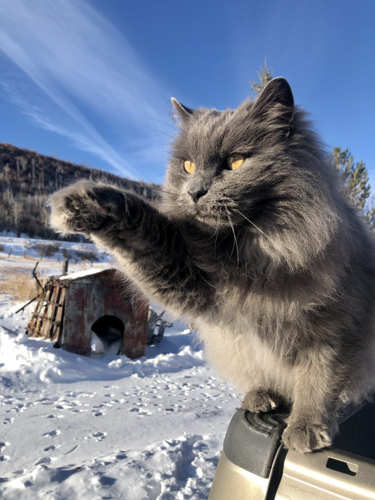 A cat poses for a perfect snow photo.