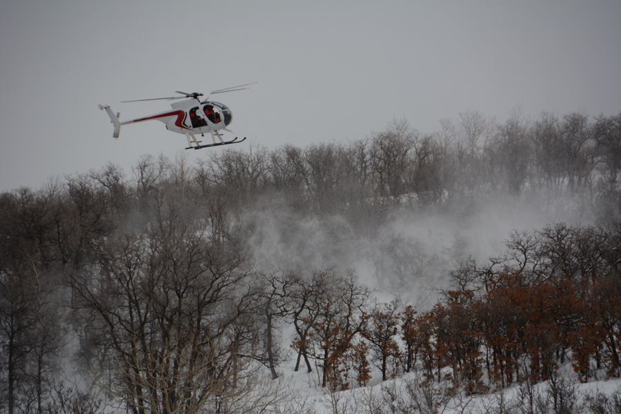 Wildlife officials are using helicopters to study elk in Routt County.