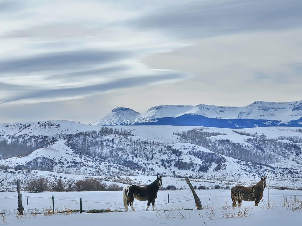 Horses stand in the snow near the Flat Tops Wilderness Area.