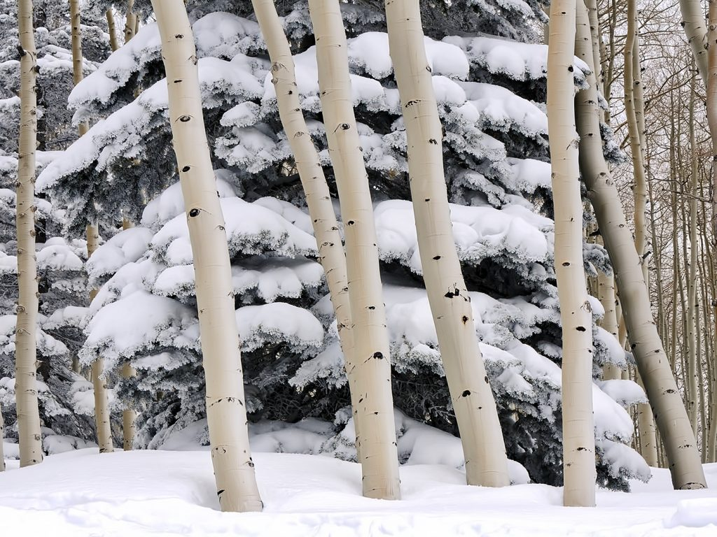 Trees seem to be growing out of snow at Steamboat Resort.