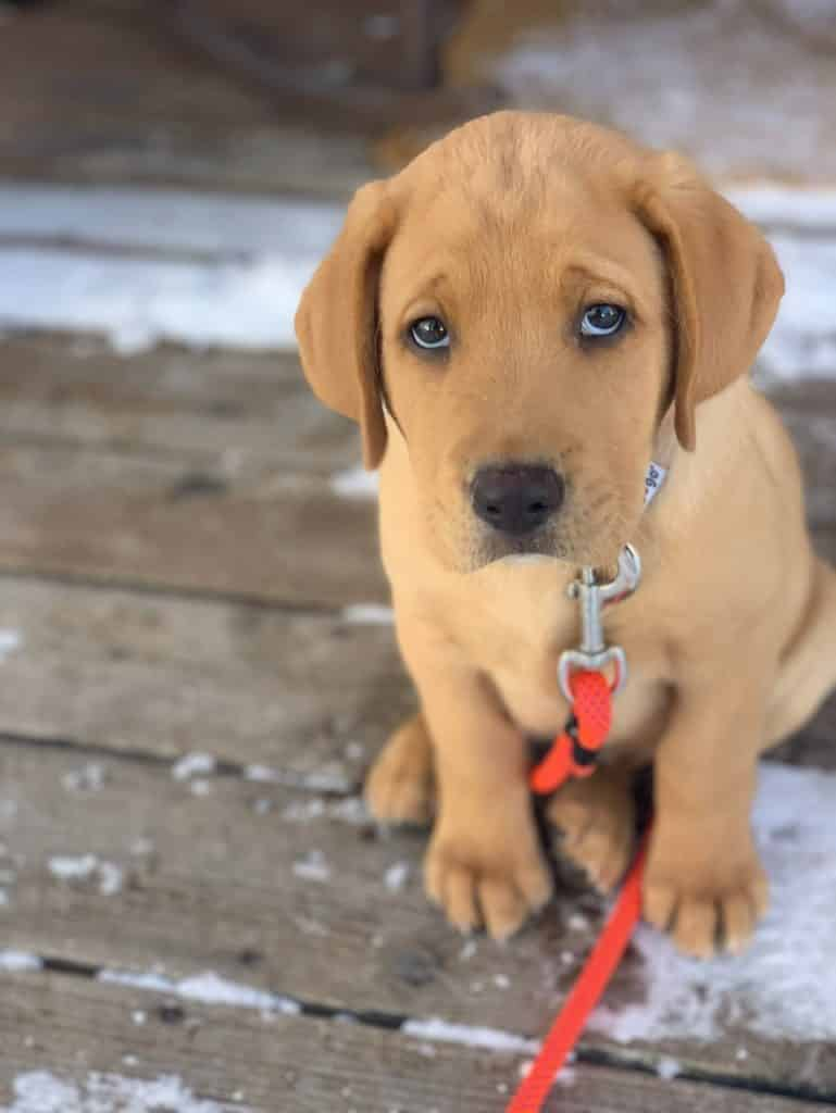 He has mastered the puppy dog eyes already!