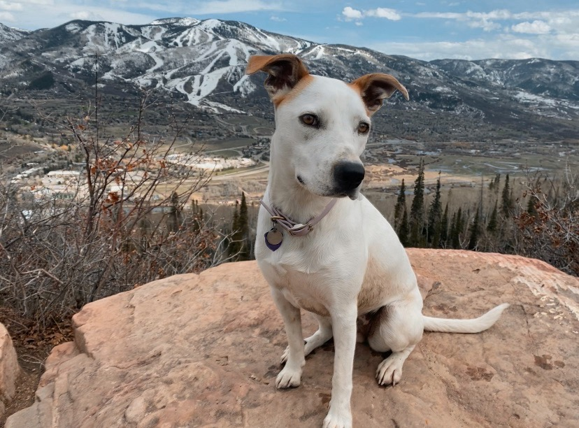 A dog and her mountain town