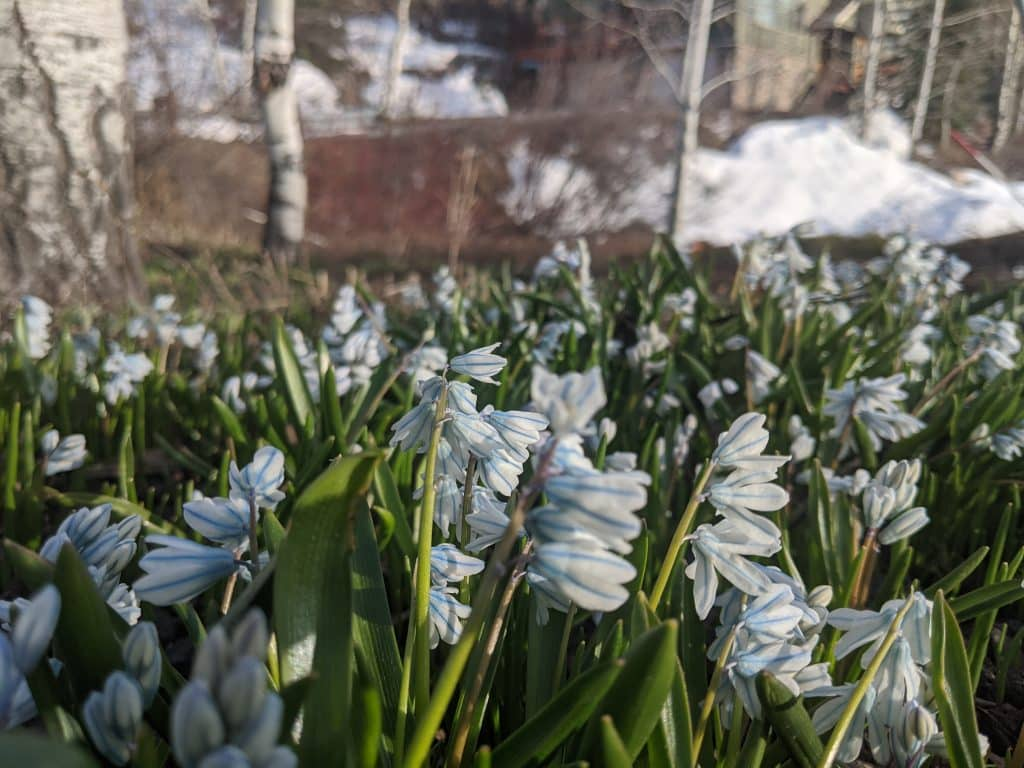 Just wanted to share first flowers of spring.... Made the day a bit brighter up here on the mountain. South Valley