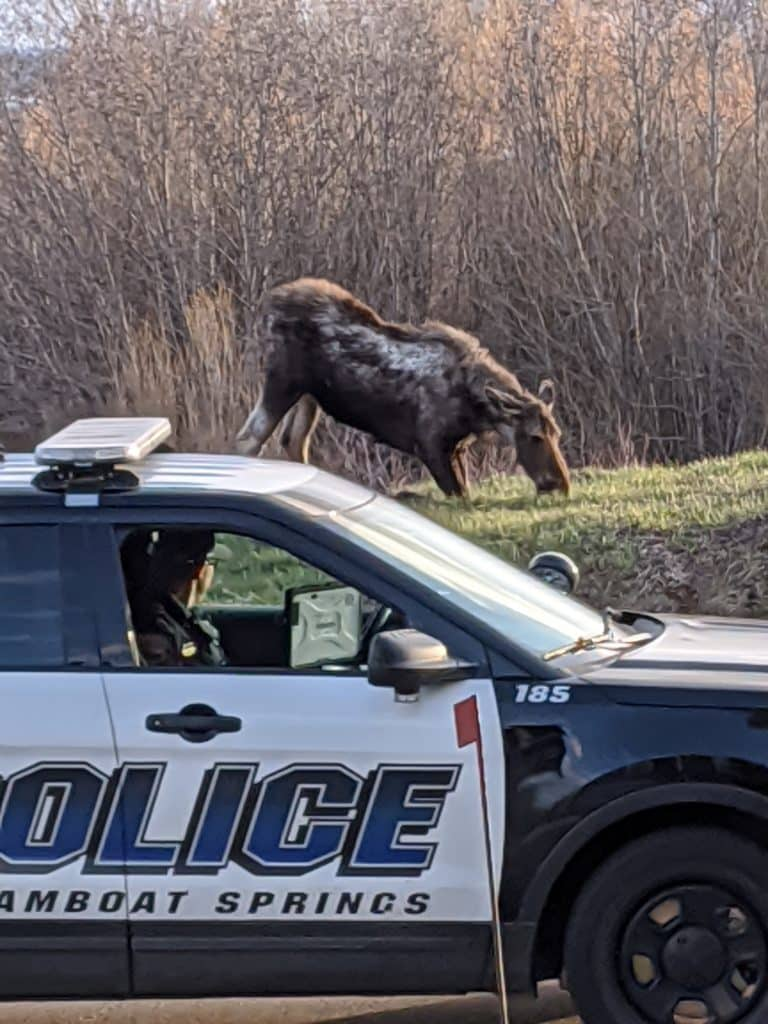Here's a picture of a moose. I would love to see it make the paper!