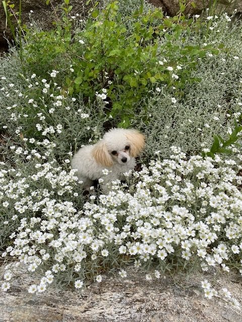 Misty in the flowers
