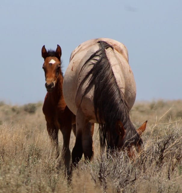 Babies from Sand Wash Basin