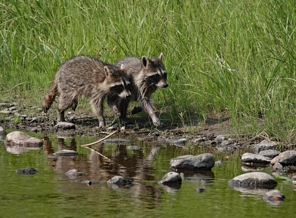 Young rascals looking for mischief along the Yampa.